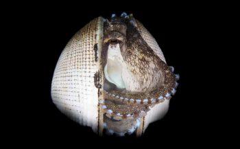 Dive into Lembeh - Pure verwennerij boven en onder water