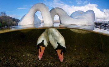 UPY2018 - de top tien Brits water Groothoek