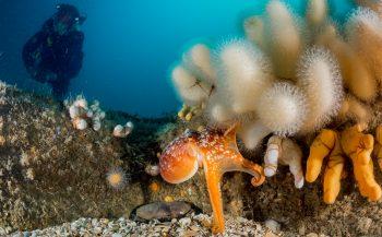 Duikexpeditie op zoek naar onderzeeboot O13 en bijzondere diersoorten