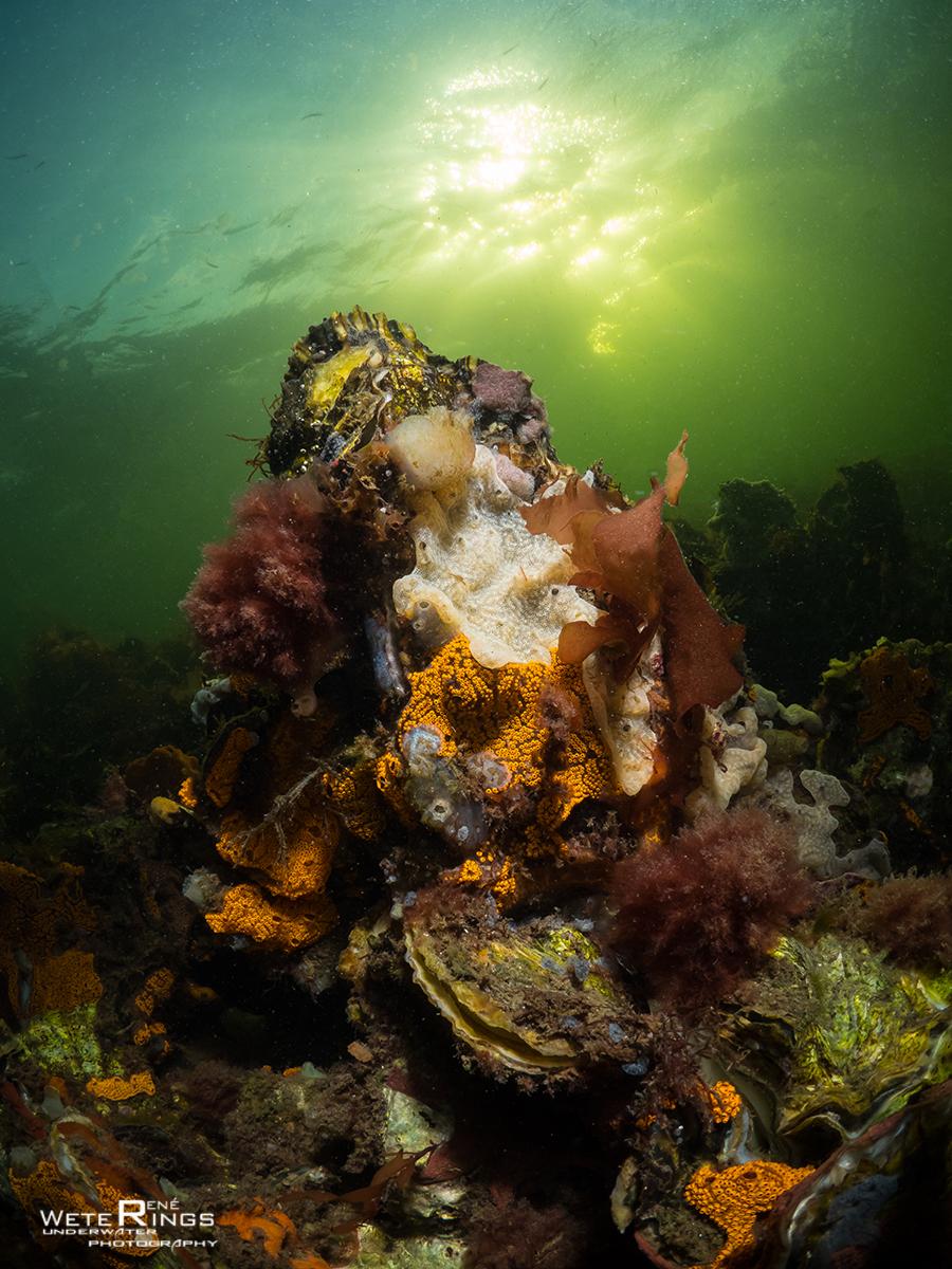 RENE_WETERINGS_20180712_832_Dreischor_Reefballs_035_LOGO-68489