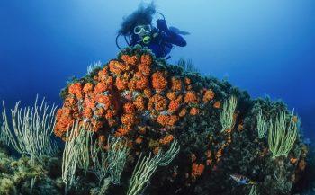 Onder water in Tunesië