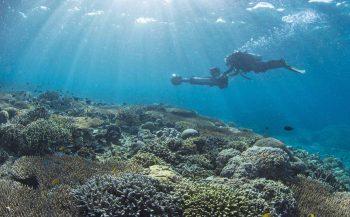 Koraalriffen bij Indonesië gezonder dan verwacht