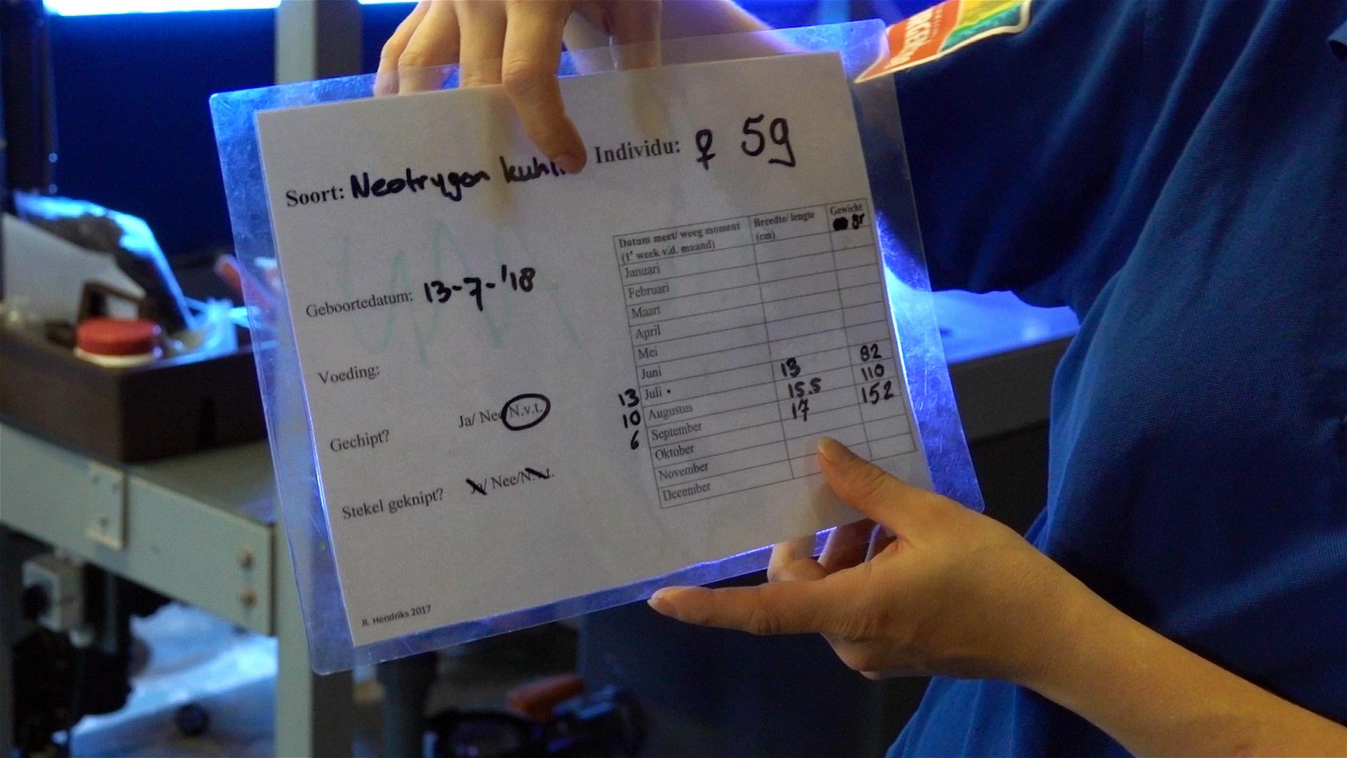 Dirk-Van-den-Bergh_20180908_steekkaart-jonge-rog-in-quarantaine-70902