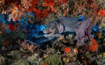 Egypte – Tips voor duikers