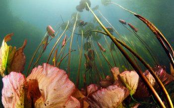 Waterlelies - Het verhaal achter de foto