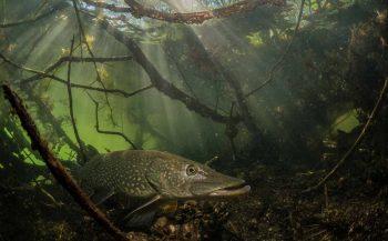 ONK Onderwaterfoto- en videografie 2019 - wedstrijdperiode 2