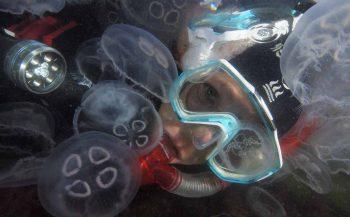 ONK Onderwaterfoto- en -videografie 2019 - de inschrijving is gestart!