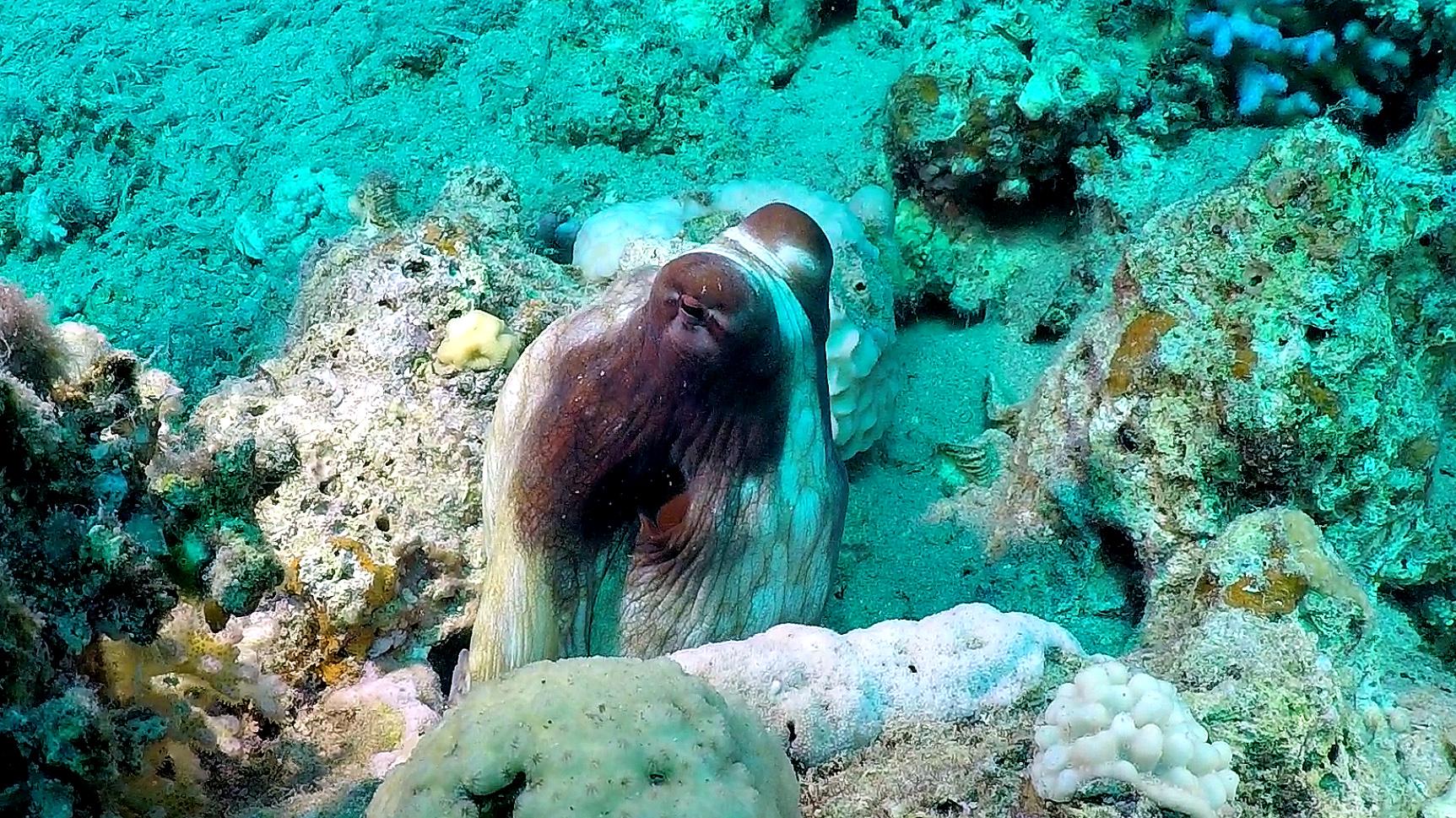Dirk-Van-den-Bergh_octopus-74196