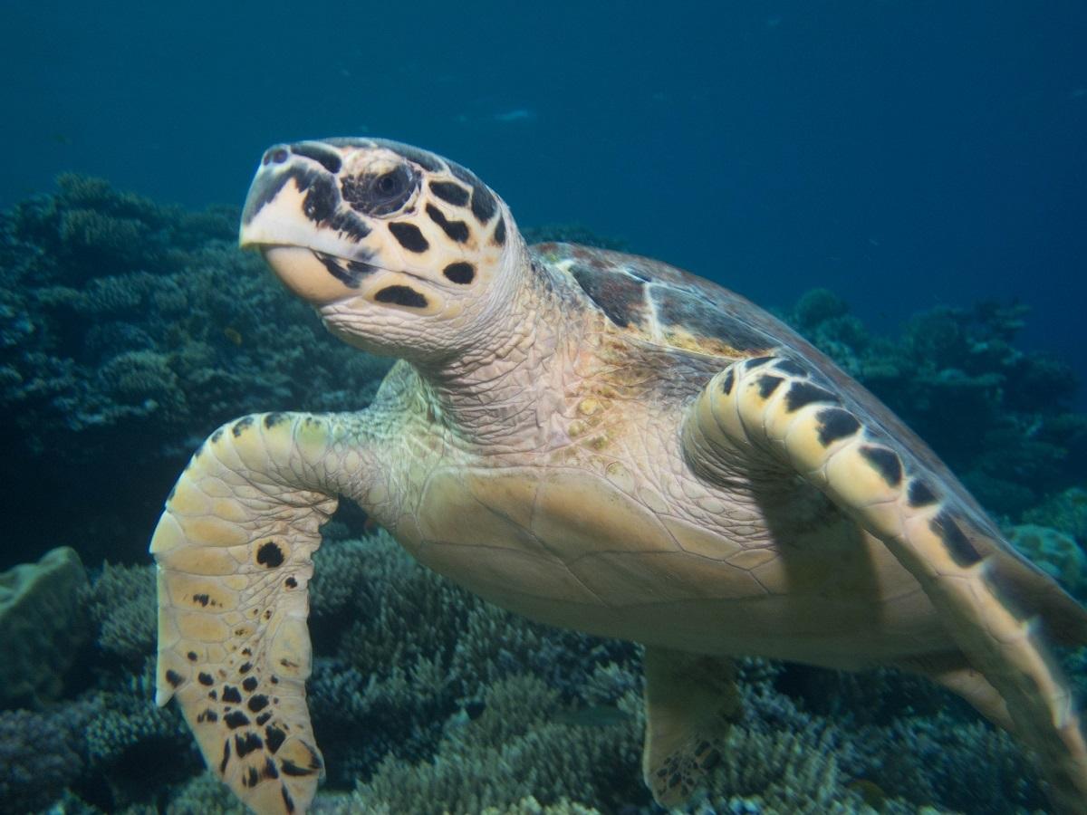 PaulinedBvS-Dahab-schildpad-74561