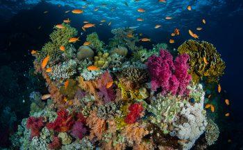 Thematafel - Onderwaterfotografie: stappen maken