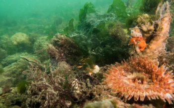 Biodiversiteit natuurlijke schelpdierbank in beeld gebracht