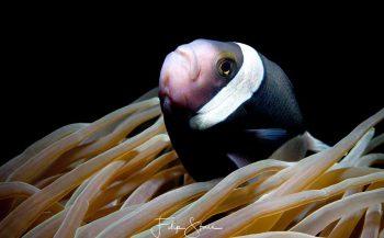 Speciale fotoreis met onderwaterfotograaf Filip Staes