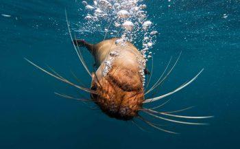Spelen met zeeleeuwen - het verhaal achter de foto