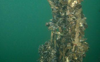 René van der Laan - De allereerste duik van het jaar