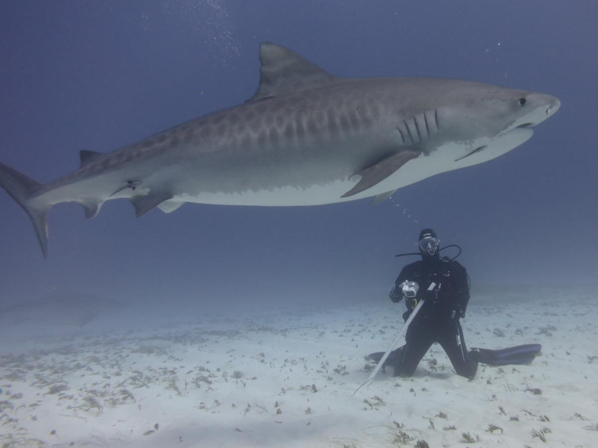 Dogterom-Bahamas-foto1-78346