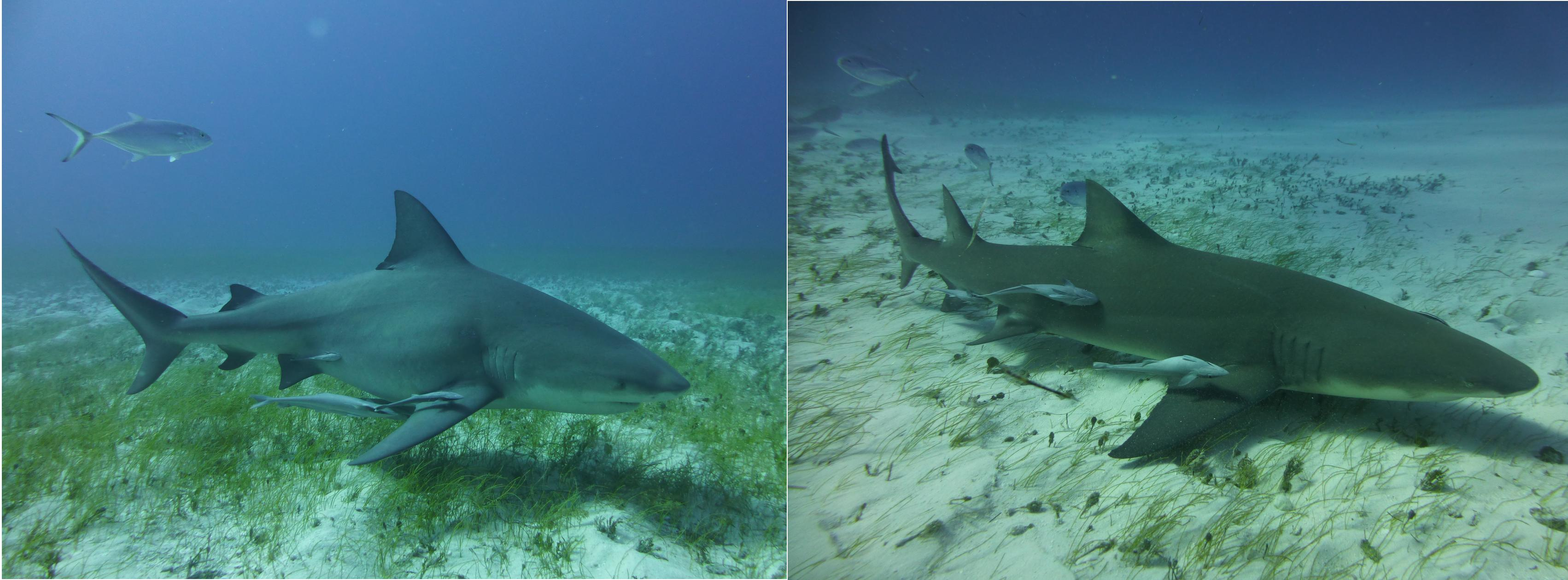 Dogterom-Bahamas-foto2-78346
