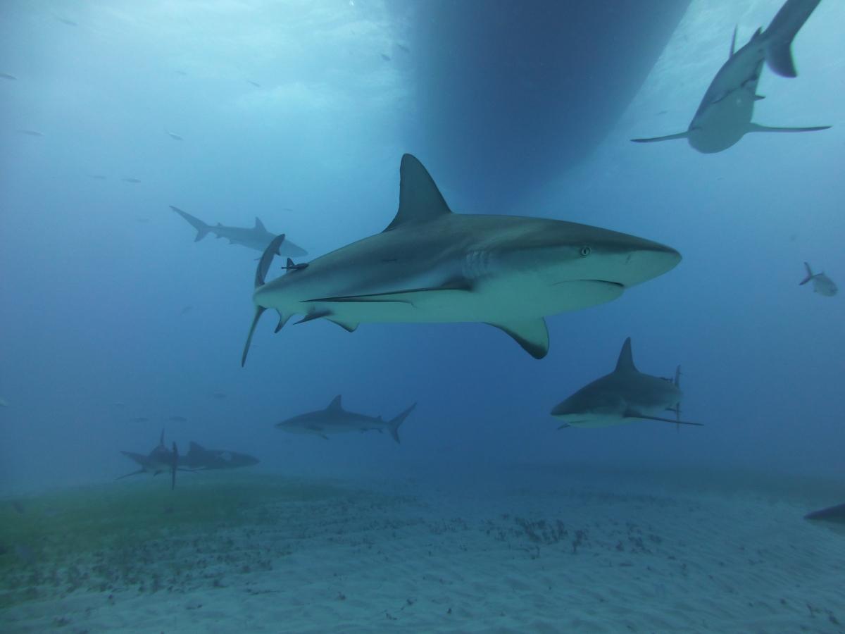 Dogterom-Bahamas-foto4-78346