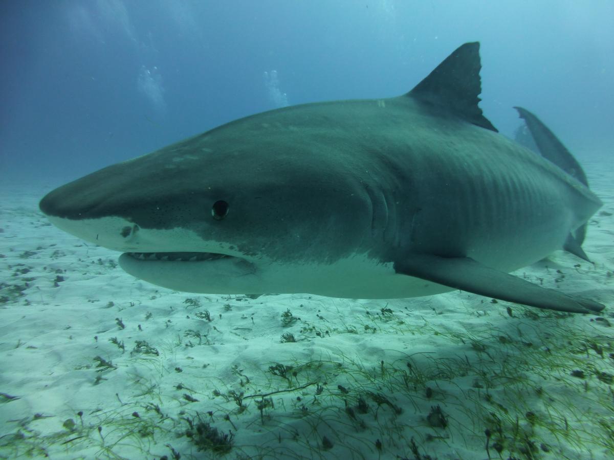 Dogterom-Bahamas-foto5-78346