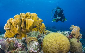 BonaireXperience – Een virtuele dagtrip naar Bonaire