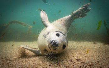 UPY2019 - de top tien Brits water Compact Camera
