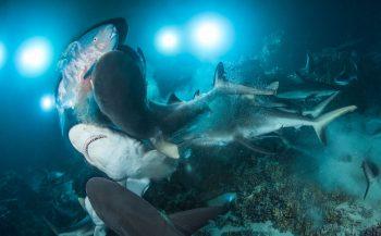 De winnaars van Underwater Photographer of the Year 2019!