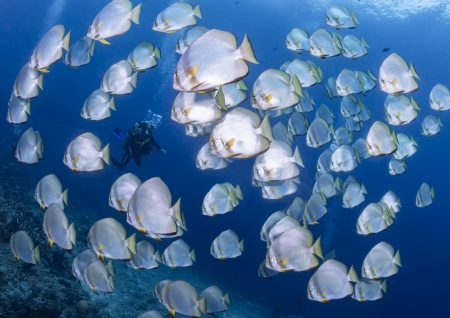 Dive-and-Travel_Noord-Sulawesi_Murex