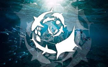 Mission Deep Blue - bescherm de oceanen