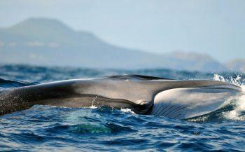 Duiken op de Azoren