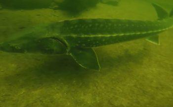 Harry Brummelhuis - Veel vis in Naturagart