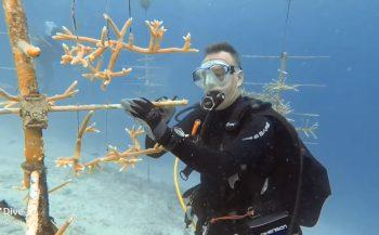 Willem van der Draaij - Reef Renewal