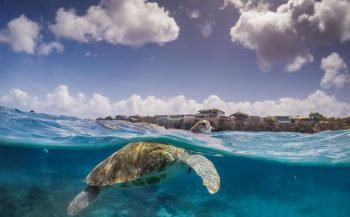 Specialty-tip: Sea Turtle Awareness