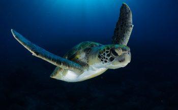 WK Onderwaterfoto en -videografie