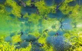Pondworld - Het verhaal achter de foto