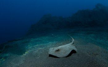Vijf zeedieren rond de Canarische Eilanden