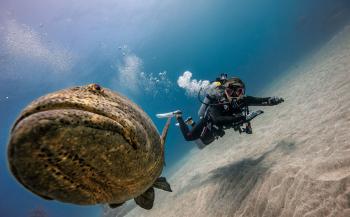 Gratis zender bij een Scubapro duikcomputer