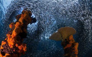 Nature Talks - Tony Wu