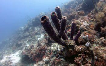 Martin Ponte - De laatste beelden van Boca Sami Reef bij Curaçao?