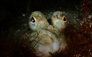 Proclamatie winnaars OBK Onderwaterfoto en -video 2020