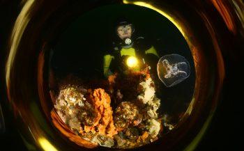 ONK Onderwaterfotografie 2019 - Masters - Groothoek met model