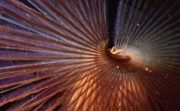 ONK Onderwaterfoto en -video 2020 - wedstrijdperiode 4