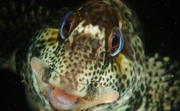 Online ontknoping van het ONK Onderwaterfoto- en -videografie