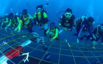 Cressi helpt koralen van Sulawesi