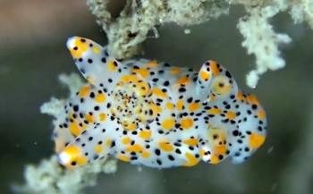 Dirk Van den Bergh - Weekdieren, kokerwormen en zakpijpen in de Oosterschelde