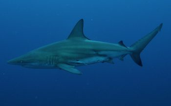 Aliwal Shoal - dé duikbestemming van Zuid-Afrika