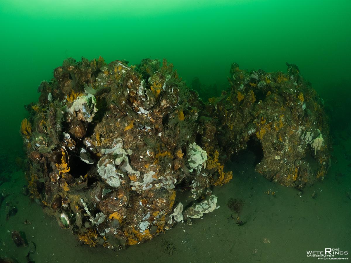 RENE_WETERINGS_20191228_945_Dreischor_Reefballs_003_Reefball-92194