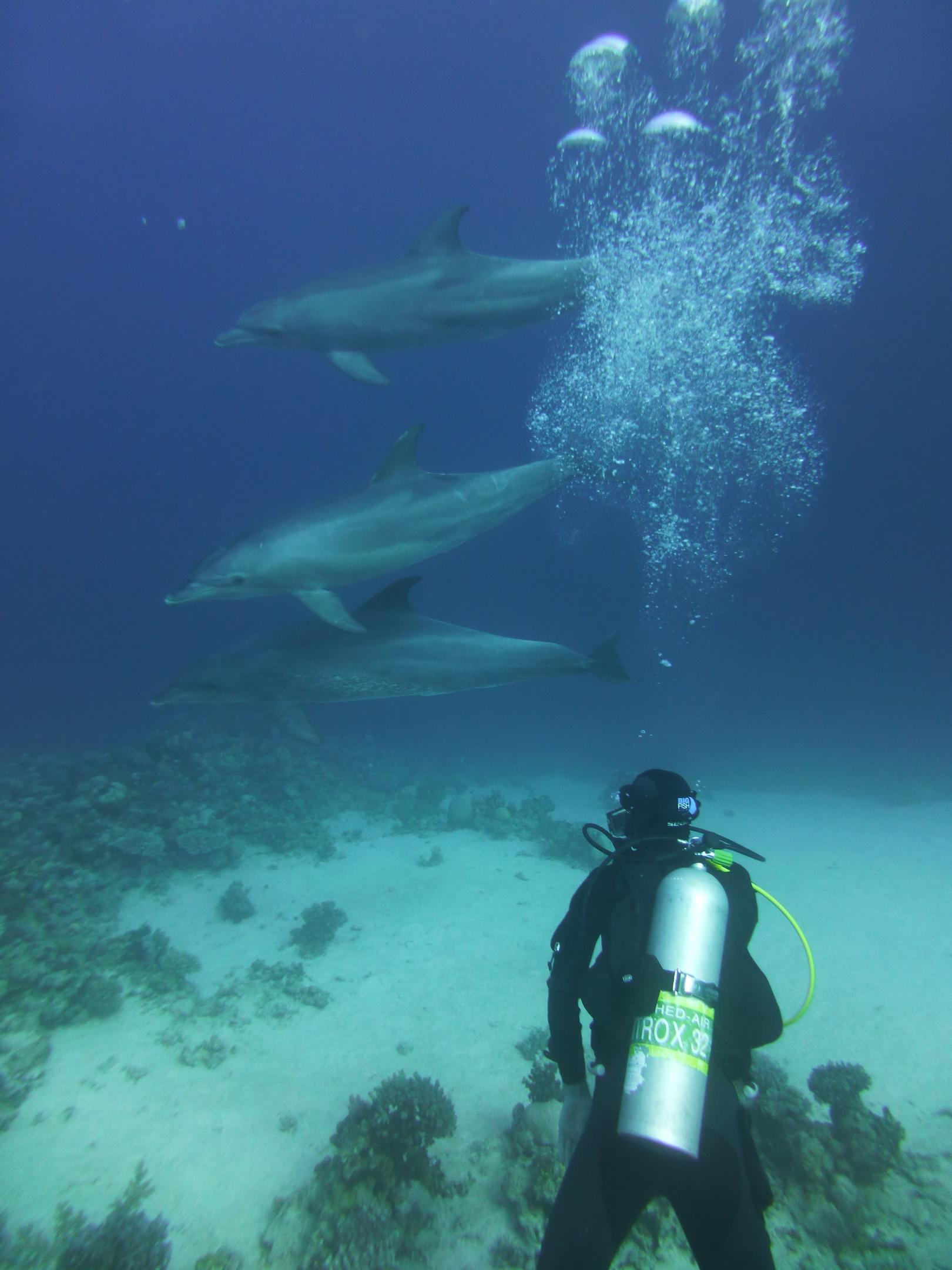 Dogterom-Dolfijnen-foto2-93684