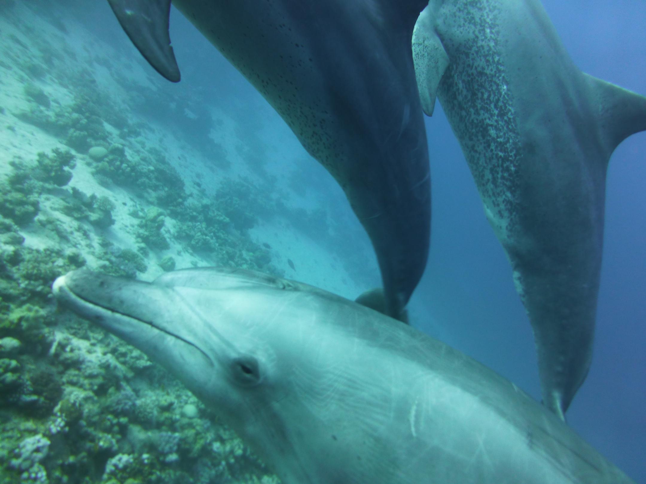 Dogterom-Dolfijnen-foto3-93684