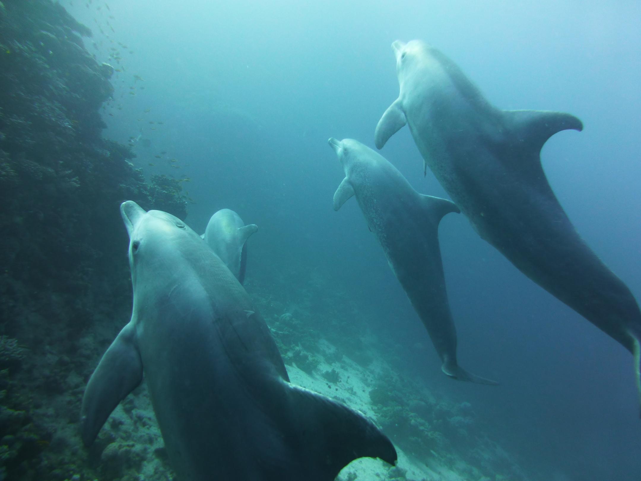 Dogterom-Dolfijnen-foto4-93684