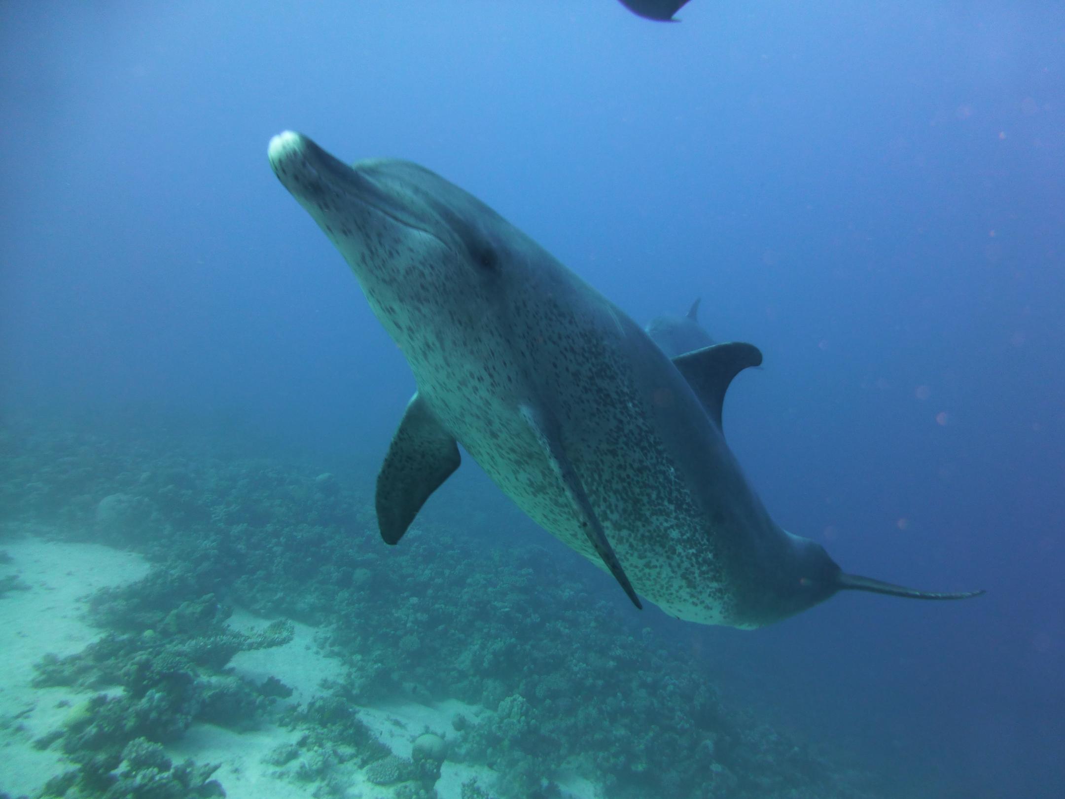 Dogterom-Dolfijnen-foto5-93684