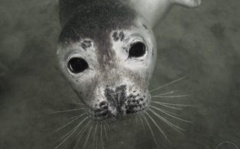 Arctic Soul - Het verhaal achter de foto